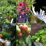 Introduction to Permaculture Weekend Course