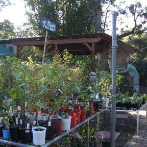 City Farm Nursery