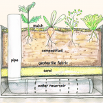 Wicking Beds and water conservation – make your own wicking garden bed