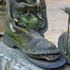 Container Gardening old shoe