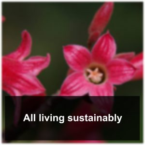 Living_Sustainably
