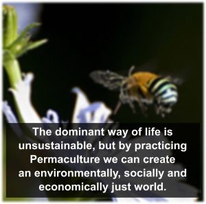 Practicing_Permaculture