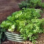 Seasonal vegetable growing in the  humid subtropics
