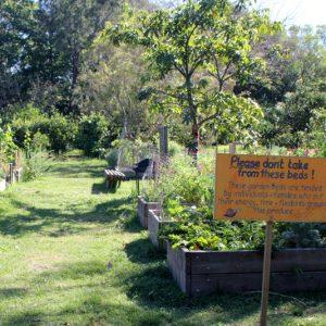 allotment gardens | northey street city farm