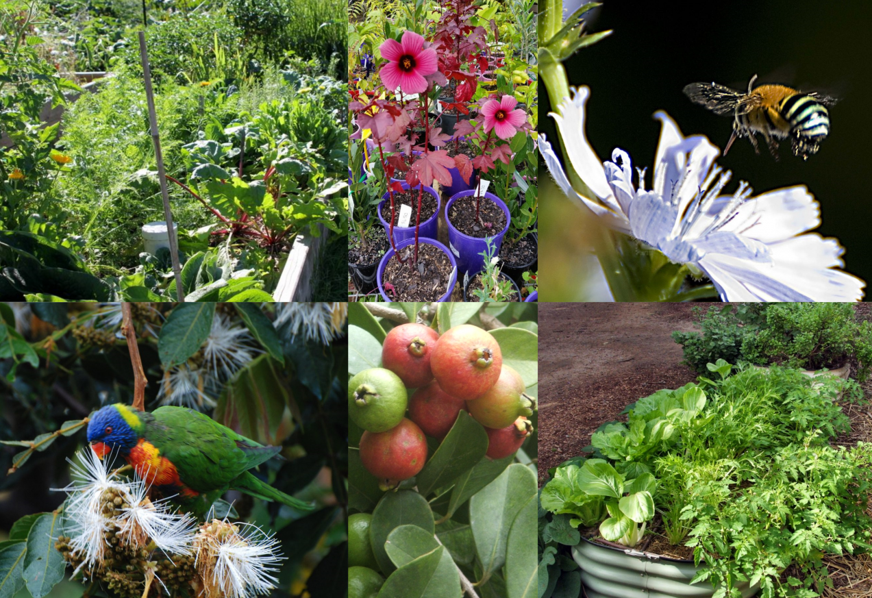 Introduction To Permaculture Weekend Course Northey